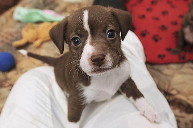 Adopt a Pet strengthen your microbiome