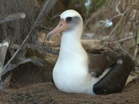 Photo of 8 Amazing Facts About Albatrosses