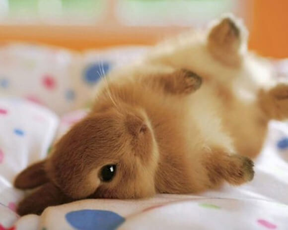 Photo of THE 17 MOST IMPORTANT BUNNY FACTS OF ALL TIME