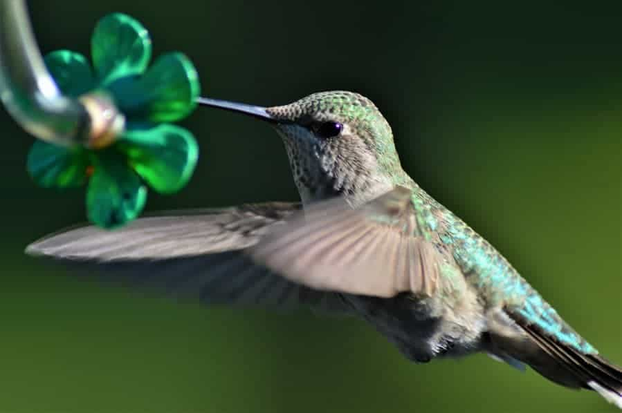 Photo of Top 10 Best Hummingbird Food