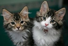 Photo of Entertainment for Cats: 5 Ways to Keep Kittens Happy