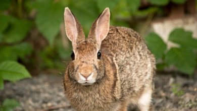 Photo of 14 Fascinating Facts about Rabbits