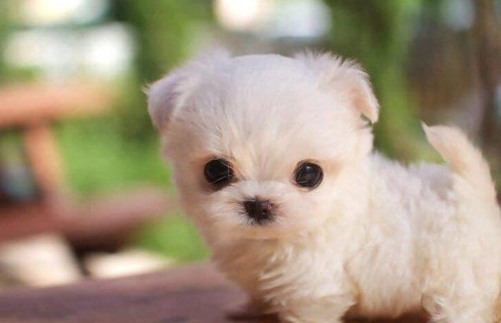 Photo of The 25 Cute Dogs Breeds You'll Wish You Could Cuddle All the Time
